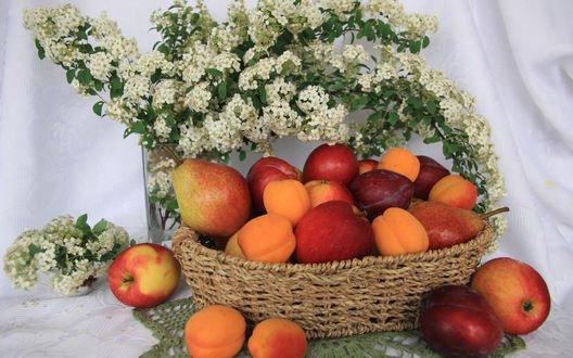 Обои Яблоки, персики, сливы и абрикосы лежат в плетеной корзинке на столе, рядом букет белых цветов