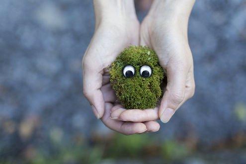 Обои Мордочка из зеленого мха с глазками, которую держат руки на размытом фоне
