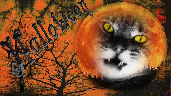 Обои Кот на фоне луны среди деревьев ночью в Хеллоуин Halloween
