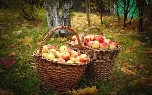 Обои Две корзины с яблоками стоят на траве в саду