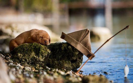 Обои Щенок спит на камне у реки