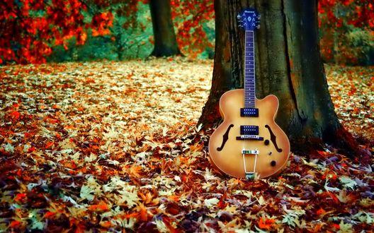 Обои Гитара у дерева