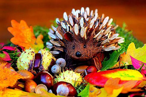 Обои Натюрморт-еж, осенние листья и орехи
