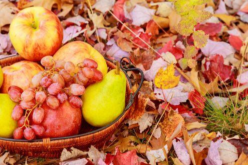 Обои Яблоки, груши, виноград в плетеной корзиночке среди осенних листьев