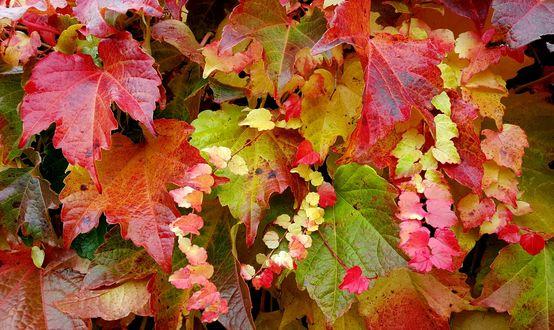 Обои Яркая осенняя листва