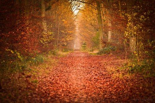 Обои Дорога усыпана осенней листвой, фотограф Lilian Thoumire