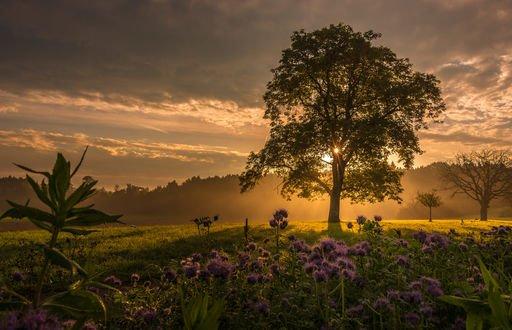 Обои Прекрасный осенний день, фотограф Kannappan sivakumar