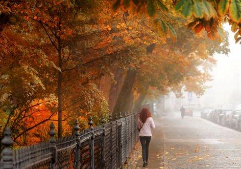 Обои Девушка идет по тротуару Санкт-Петербурга. Октябрь. Фотограф Гордеев Эдуард