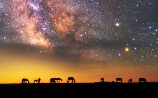 Обои Силуэты лошадей на фоне звездного неба