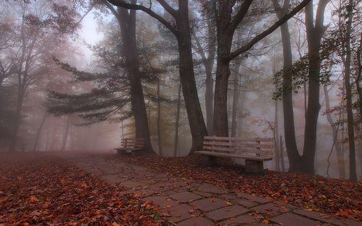 Обои Осенний парк в густом тумане