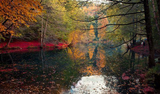 Обои Деревья у озера, национальный парк Seven Lakes / Семь озер осенью, Turkish / Турция, by Efemir Art