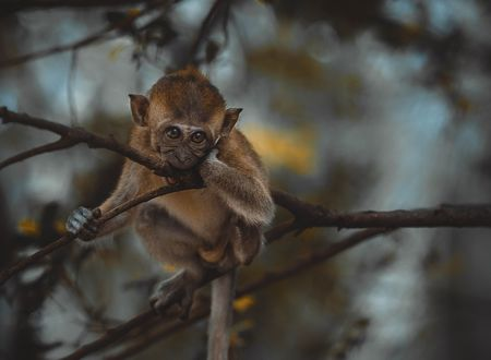 Обои Грустная обезьяна на дереве, by Efemir Art