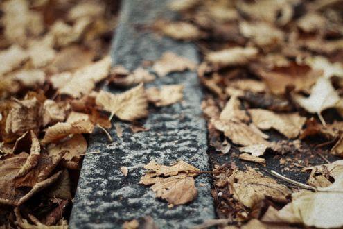 Обои Осенние листья на асфальте