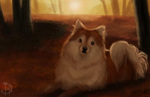 Обои Милая собачка лежит на осенних опавших листьях в лесу. by Dheyline