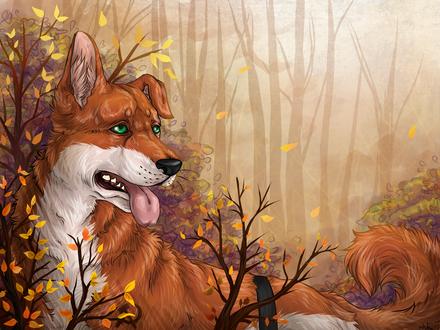 Обои Рыже-белый пес на фоне осеннего леса, by Shokoro-san