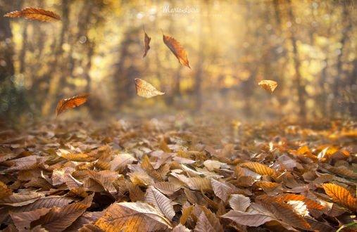 Обои Падающие осенние листья, фотограф Maria Luisa Milla