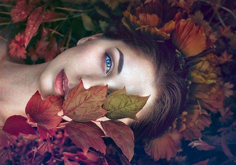 Обои Девушка лежит на осенних листьях, фотограф Monica Lazar