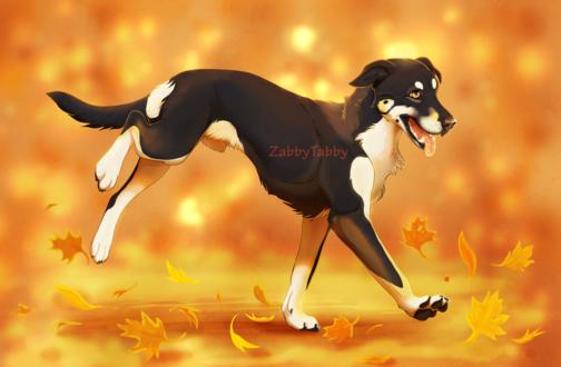 Обои Пес на фоне осенних листьев, by ZabbyTabby