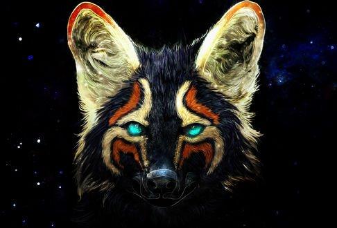Обои Морда цветного волка на фоне звездного неба