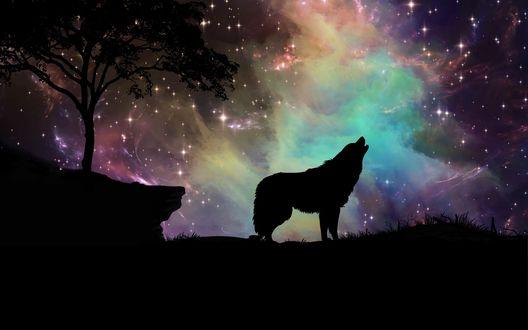 Обои Силуэт волка на фоне звездного неба