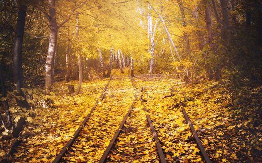 Обои Железнодорожные пути усыпаны осенними листьями