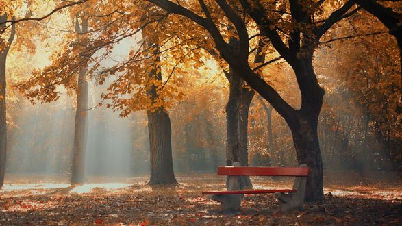 Обои Скамейка в осеннем парке, в который проникают солнечные лучи