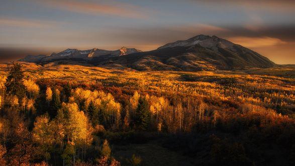 Обои Осенний лес у подножья гор