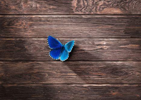 Обои Голубая бабочка на досках