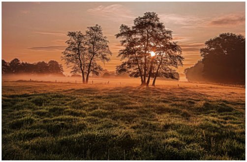 Обои Закат над зеленым полем с деревьями