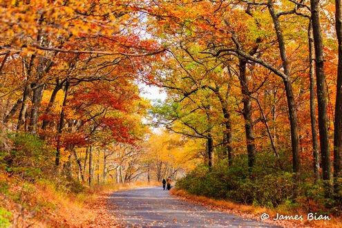 Обои Люди идут по дороге посреди осенних деревьев, фотограф James Bian