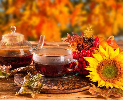 Обои Осенний натюрморт с чаем, гроздьями рябины, цветком подсолнуха на размытом фоне
