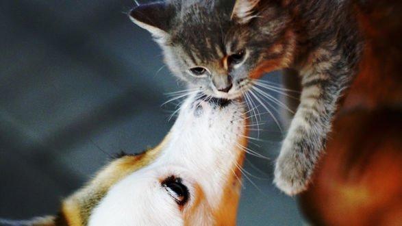 Обои Пес прикасается к мордочке кошки, by Barry Leung (Busy)