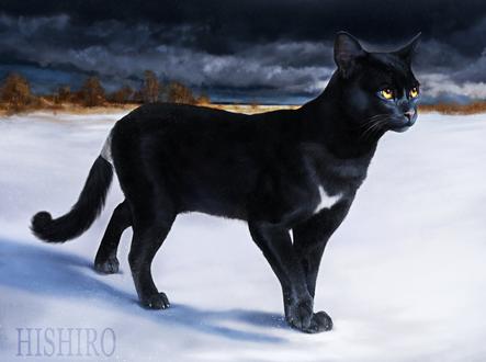 Обои Черный кот на снегу, by hi-shiro
