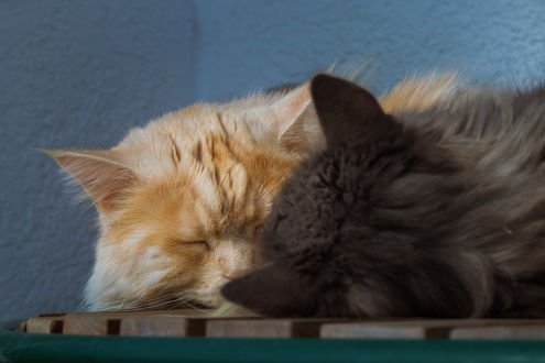Обои Два спящих кота, фотограф Regina