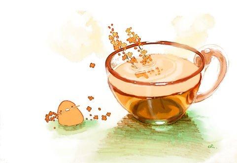 Обои Чай с османтусом и оранжевая птичка