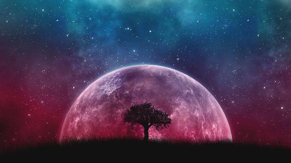 Обои Одинокое дерево на фоне планеты и космоса