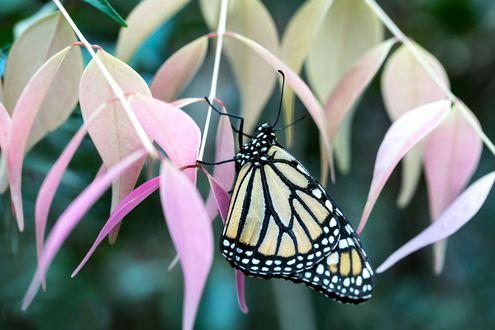 Обои Бабочка сидит на листочках, боке фон