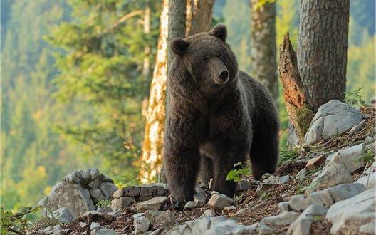 Обои Медведь на природе, фотограф Christina Mayer