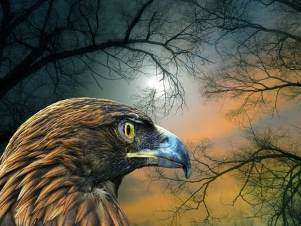 Обои Голова орла на фоне ночного неба с деревьями, by peter holme iii
