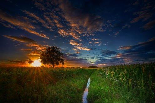 Обои Восход солнца над зеленым полем, фотограф Stefan Kierek