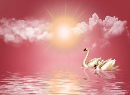 Обои Лебеди на воде под облачным небом