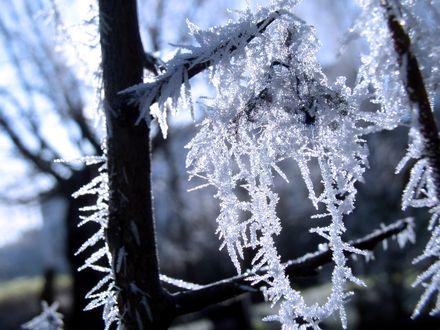 Обои Обмороженные ветки дерева в снегу зимой
