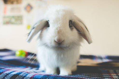 Обои Кролик сидит на кровати, by jamiedenton