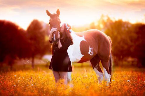 Обои Девушка с конем на поляне