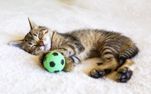 Обои Полосатый котенок спит на ковре