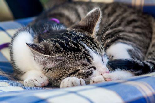 Обои Спящий полосатый кот