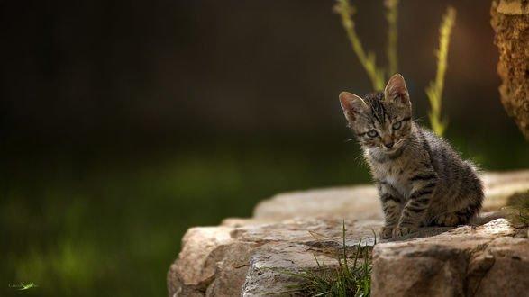 Обои Грустный маленький котенок сидит на камне, фотограф Carlos Santero