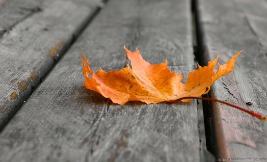 Обои Осенний лист на досках, фотограф Toni Kokkinen