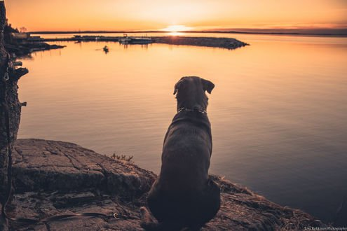 Обои Пес сидит у водоема, фотографToni Kokkinen