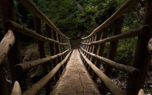 Обои Подвесной деревянный мост, ведущий на гору, заросшую лесом
